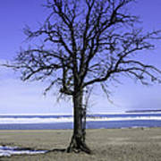 Lone Tree At Fort Gratiot Light House  Poster