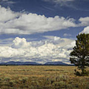 Lone Tree In The Grand Teton National Park Poster