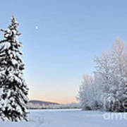 Lone Winter Spruce - Alaska Poster