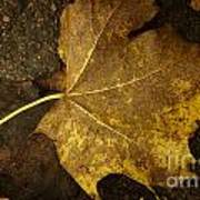 Lonely Autumn Leaf Poster