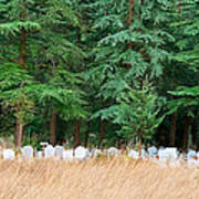 Lonely Graveyard Under Pine Trees Poster
