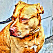 Lonely Pit Bull Poster