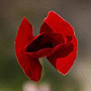 Lonely Poppy Poster