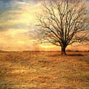 Lonely Tree At Sunset Poster