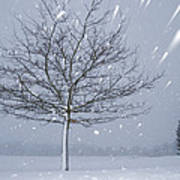 Lonely Tree In Snow Bavaria Poster