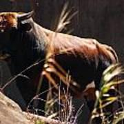 Lonesome Bull Poster