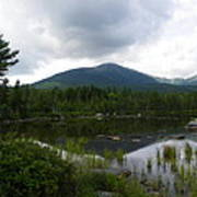 Lonesome Pine At Sandy Stream Pond Poster