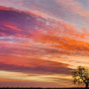 Lonesome Tree Sunrise Poster