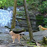 Long Creek Falls Poster by Bob Jackson