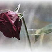 Red Rose Still Life Poster