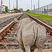Rhino On A Railway Track Poster