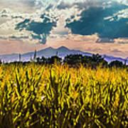 Longs Peak Harvest Poster by Rebecca Adams