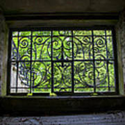 Looking Through Old Basement Window On To Vibrant Green Foliage Fine Art Photography Print  Poster