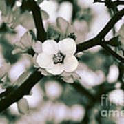 Looking Through The Blossoms 2 By Kaye Menner Poster
