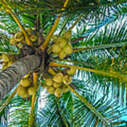 Looking Up A Coconut Tree Poster