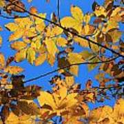 Looking Up To Yellow Leaves Poster