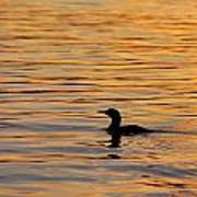 Loon At Sunset 6958 Poster