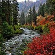 Loon Creek In Fall Colors Poster