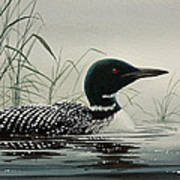 Loon Near The Shore Poster by James Williamson