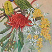 Lorikeet And Wildflowers Poster