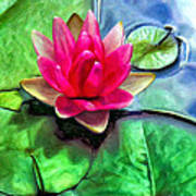 Lotus Blossom And Cloud Reflection Poster