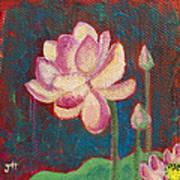 Lotus Dream Poster