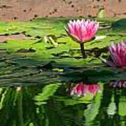 Lotus Flower Reflections Poster