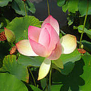 Lotus I Poster