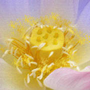 Lotus In Side Poster by Lila Shravani