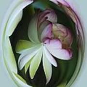Lotus Mirror Poster