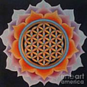 Lotus Of Life Poster
