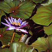 Lotus One Poster