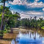 Louisiana Swamp Poster by Tammy Smith