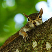 Lounging Squirrel Poster