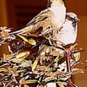 Love Birds II Poster