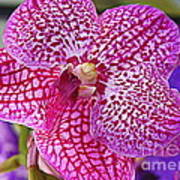 Orchid Lovely In Pink And White Poster