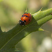 Lovely Lady Bug Poster