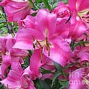 Lovely Lilies  Poster