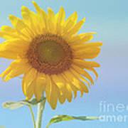 Loving The Sun Poster