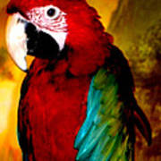 Lucky Look Bird Poster