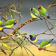 Lucky Seven - Gouldian Finches Poster