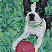 Lucy With Ball In Grass Poster