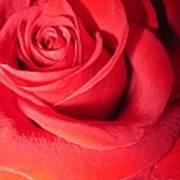 Luminous Red Rose 6 Poster