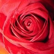 Luminous Red Rose 7 Poster