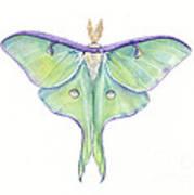 Luna Moth Actias Luna Poster
