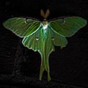Lunar Moth Poster