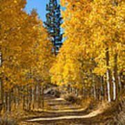 Lundy Canyon Poster