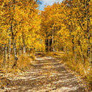 Lundy Canyon Pathway Poster