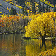 Lundy Lake In Fall Poster