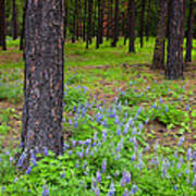 Lupine Forest Poster